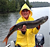 Catching BIG Muskie Fishing at Fireside Lodge by Todd Busdiecker
